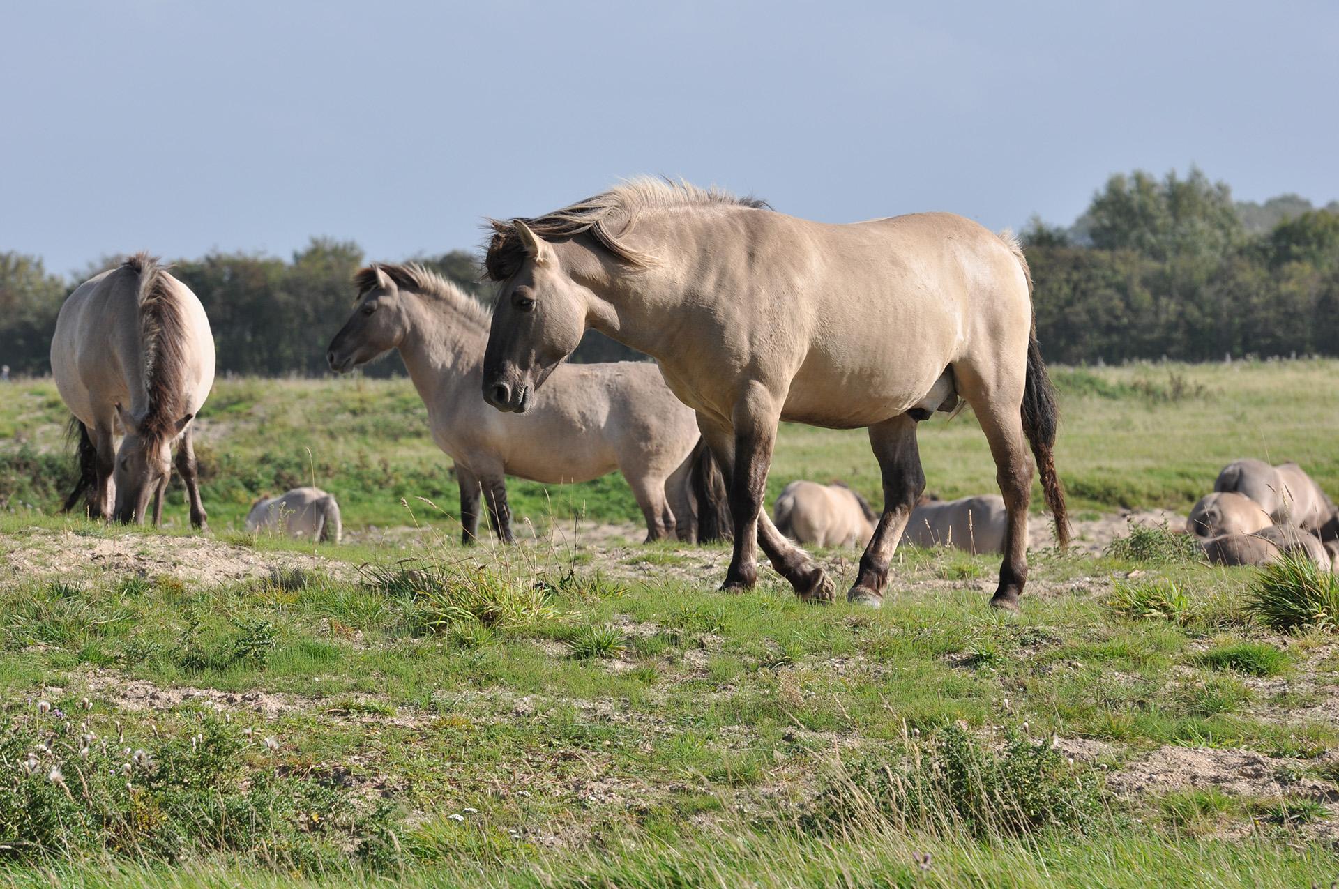 Zwin natuur reservaat B&B Aquavit Knokke